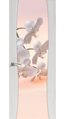 """Буревестник-2 ясень серый """"Орхидея""""(ст)"""