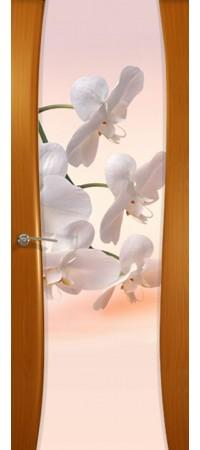 """Межкомнатная дверь  серии Prestige Буревестник-2 Анегри """"Орхидея""""(ст)"""